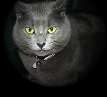 Cattitude Face by Maria Dryfhout