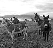 Donkeys by Scott Moore