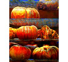 Pumpkins on the Rack Photographic Print