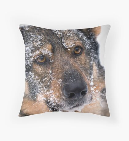 Frosty Lobo Throw Pillow