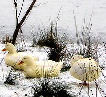 Sitting Ducks Part 2 by Lyndsay81