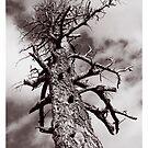 Spooky Tree by deahna