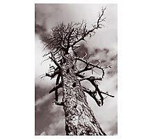 Spooky Tree Photographic Print