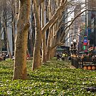 Bryant Park Trees by andykazie