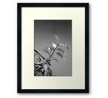 tangled leave Framed Print