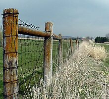 Fence Line by Lisa Bianchi