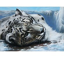 Snow Leopard on top of the world. Photographic Print