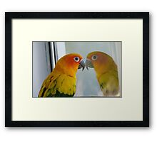 Tell me the truth, do I look fat in this! Sun Conure - NZ ** Framed Print