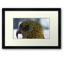 Proflie of a Kea! - Remarkables - Queenstown - New Zealand Framed Print
