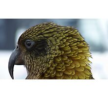 Proflie of a Kea! - Remarkables - Queenstown - New Zealand Photographic Print