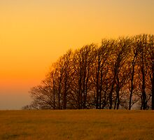TREES OVER HILL by GlennB