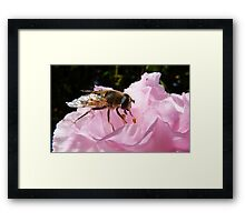 Dropping in for a bite! Hoverfly on Rhododendron New Zealand Framed Print