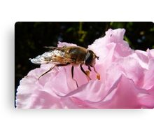 Dropping in for a bite! Hoverfly on Rhododendron New Zealand Canvas Print