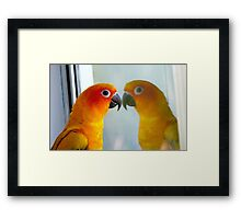 Hey good looking! - Sun Conure - New Zealand ** Framed Print