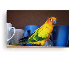 Coffee or Tea? - Sunshine - Sun Conure - NZ Canvas Print