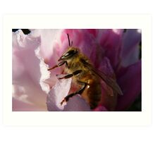 Simply Bee! - NZ - Southland Art Print