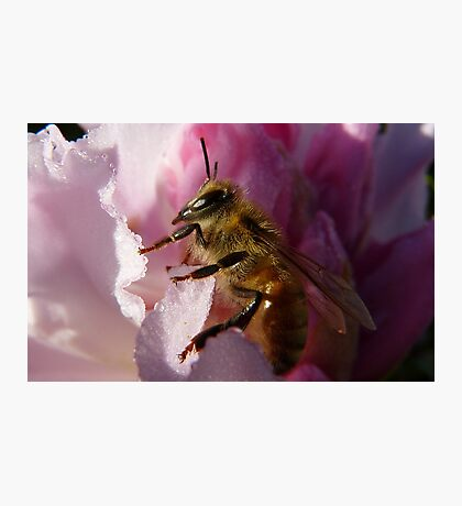 Simply Bee! - NZ - Southland Photographic Print