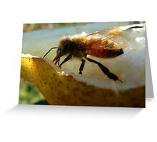 Bee Happy! - Bee on pair! - NZ - Southland Greeting Card