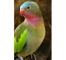 Do you like my Pastel Outfit! - Princess Parrot - NZ - Southland Photographic Print