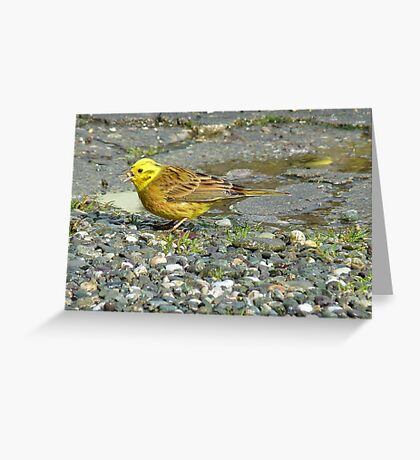 Down the hatch! - Yellowhammer - NZ Southland Greeting Card