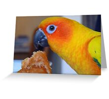 I hope no one is looking! - Sun Conure - NZ ** Greeting Card