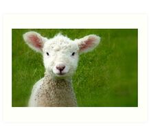 Mmm Whats that Mum!!! - Lamb - NZ - Southland Art Print