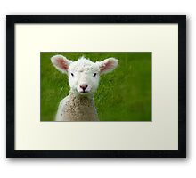 Mmm Whats that Mum!!! - Lamb - NZ - Southland Framed Print