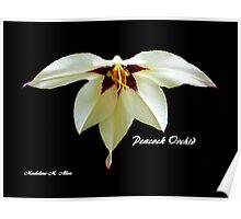 PEACOCK ORCHID Poster