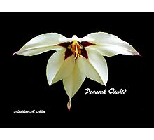 PEACOCK ORCHID Photographic Print