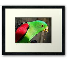 I am a true beauty! - Red Wing Parrot - NZ - Gore Framed Print