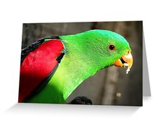 I am a true beauty! - Red Wing Parrot - NZ - Gore Greeting Card