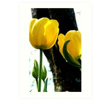 Standing tall! - Yellow Tulips - NZ - Gore - Southland Art Print