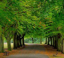 Promenade by Stephen Dugdale