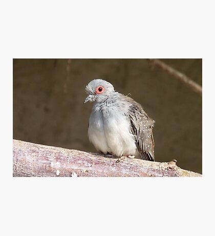 I am not the Ugly Duckling - Diamond Dove - NZ - Southland Photographic Print
