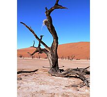 desert tree and nest Photographic Print