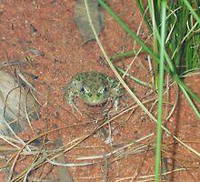 Find my little frog friend by cheridan