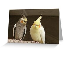 Friends catching up! - Cockatiels - NZ - Southland Greeting Card