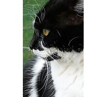 I'm not looking! - Cat - NZ - Southland Photographic Print
