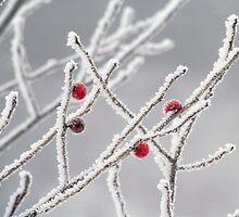 frozen berries by Janet Gosselin