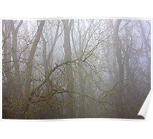 Woodland Fog Poster
