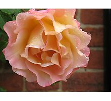 Rose Droplet  Photographic Print