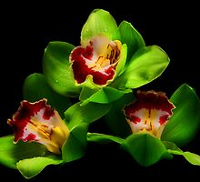 Green Orchids by jerry  alcantara