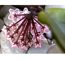 garden stars Photographic Print