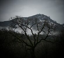 Bear Mountain Tree Silouette by Billie Bullock
