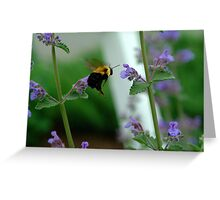 BEES RUSH IN Greeting Card