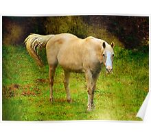 Alone in the Pasture Poster