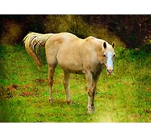 Alone in the Pasture Photographic Print