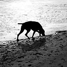 Beach Dog by Andrew Dunwoody