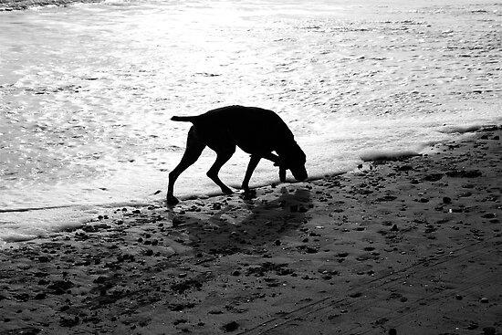 Beach Dog by Andrew Dunwoody
