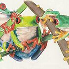 Red-Eyed Tree Frogs by BarbBarcikKeith